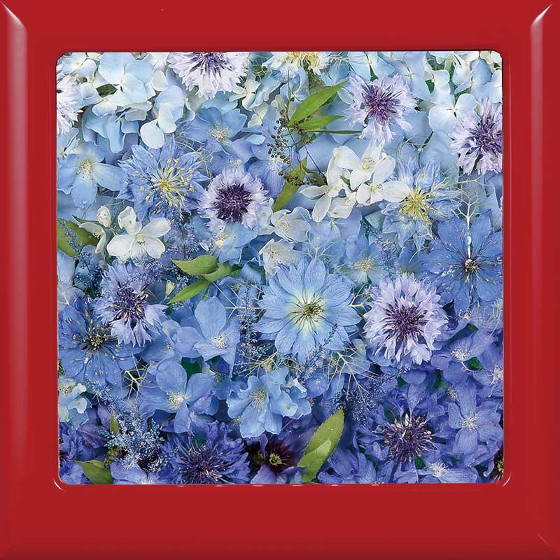 供養花-6683
